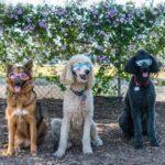 best dog parks in fullerton