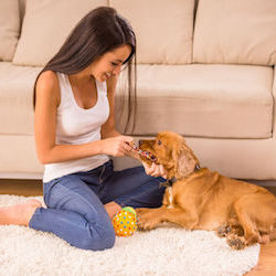 Fullerton Best Dog Sitters