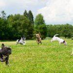 find fullerton best dog parks
