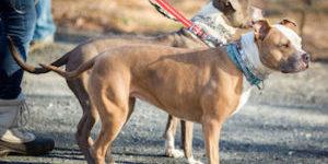 Find Fullerton Dog Walkers