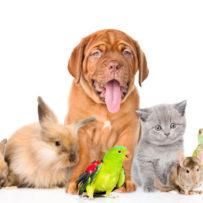 Fullerton Pets