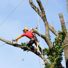 Find Fullerton Tree Service